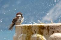 bird-1387924_640